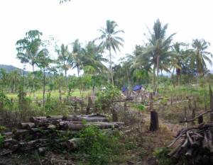 SabaUmum001
